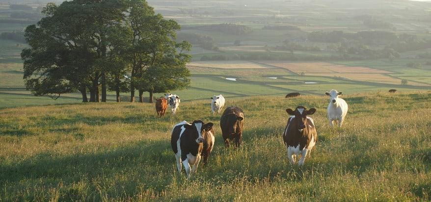 U.S. Cattleman's Association Petitions USDA